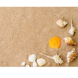 Kategori resimi Deniz Kabuk Kumları (Ortalama 1 Kg)