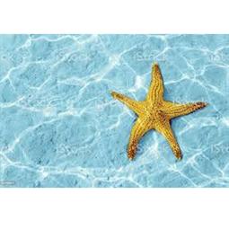 Kategori resimi Doğal Deniz Yıldızları