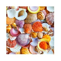 Kategori resimi Deniz Kabukları (30-50 gr Arası)