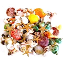 Kategori resimi Deniz Kabukları (1 Kg ve 500 gr)